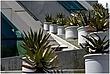 10SD.Cacti_7571.jpg