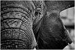 13RI.Zoo-Elephant_4693g.jpg