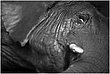 13RI.Zoo-Elephant_4733g.jpg