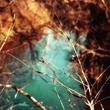 Autumns Last Breath.jpg