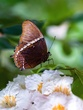 Butterfly with Bokeh Heart.jpg
