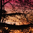Sunset Dove.jpg
