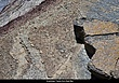3974 -Amphibian tracks -East Bay.jpg