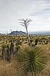 Desert Vista 3.jpg
