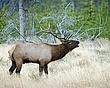 Elk 2.jpg