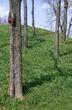 1L393 Campbell Mound.jpg