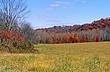 3A259 Wayne National Forest.jpg
