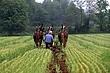 4D125 Malabar Farm.jpg
