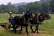 4D173 Malabar Farm.jpg