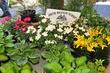 D38T-6-Toledo Farmers Market Flower Days.jpg