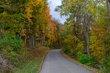 FX103T-165-Fall Festival of Leaves.jpg