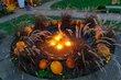 FX23D-309-Fall Mums and Pumpkins Festival.jpg