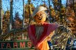 FX24D-208-Fall Farm Days.jpg