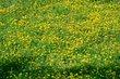 FX33B-71-Lake Loramie State Park.jpg