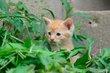 FX6F-215-Kittens 2014.jpg
