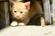 FX6F-222-Kittens 2014.jpg