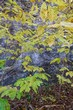 FX78A-108-Highland Nature Sanctuary.jpg