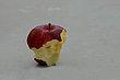 FX9T-35-Aullwood Apple Fest.jpg