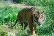 D1F-1433-Akron Zoo.jpg