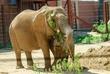 D1F-1514-Toledo Zoo.jpg