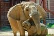 D1F-1518-Toledo Zoo.jpg