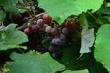 FX33-O-54-Heinemans Wines.jpg