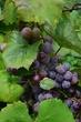 FX33-O-58-Heinemans Wines.jpg
