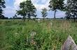 4A79 Smith Cemetery Prairie.jpg