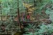 FX10A-961-Cantwell Cliffs1.jpg