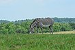 FX11F-263-The Wilds.jpg
