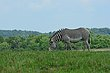 FX11F-267-The Wilds.jpg