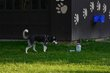 FX70A-243-Hueston Woods Dog Park.jpg