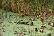 FX76A-14-Sheldon Marsh State Nature Preserve.jpg