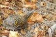 D5F-10-Turtle.jpg