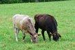 FX12D-251-Slate Run Historical Farm.jpg