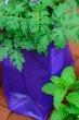 FX25T-251-Herb Day.jpg