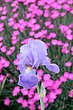 FX4M-189-Cox Arboretum.jpg