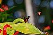 FX5L-404 Blooms and Butterflies.jpg