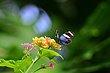 FX5L-409 Blooms and Butterflies.jpg