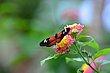 FX5L-414 Blooms and Butterflies.jpg