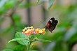FX5L-418 Blooms and Butterflies.jpg