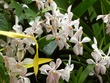 Rare and different Orchids.jpg