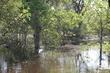 flooded trees.jpg