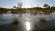 in the Okovango delta.jpg
