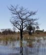 okovango waterways.jpg
