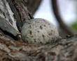 one of the nesting birds eggs.jpg