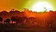 sunset on the zambezi.jpg