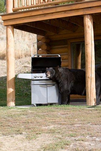 TC-Urban Wildlife-D00815-00055.jpg