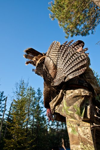 TC-Turkey Hunting-D90006-00772.jpg