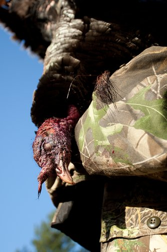 TC-Turkey Hunting-D90006-00776.jpg